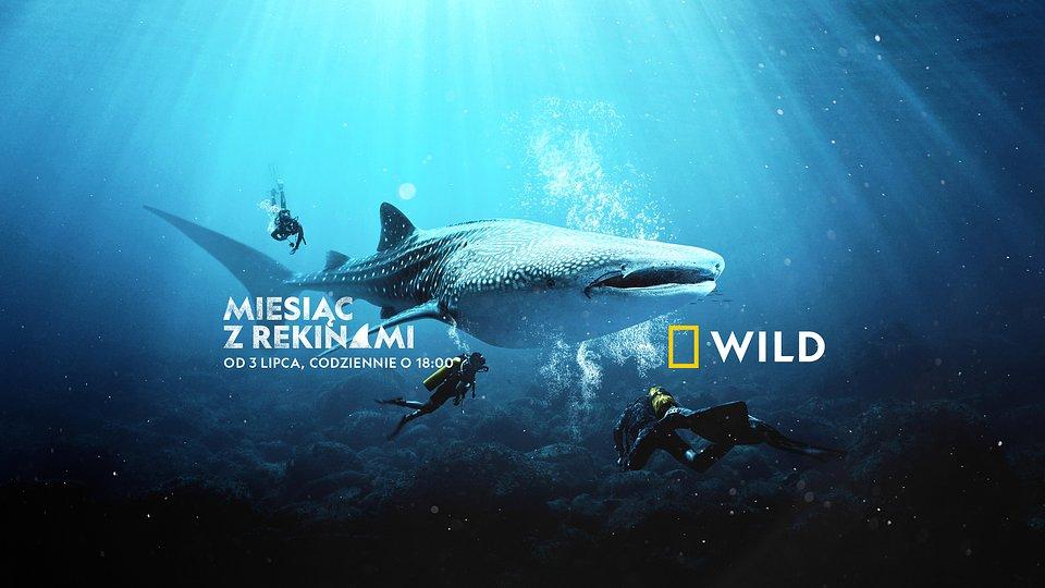 Sharkfest_lipiec 2021_National Geographic Wild.jpg