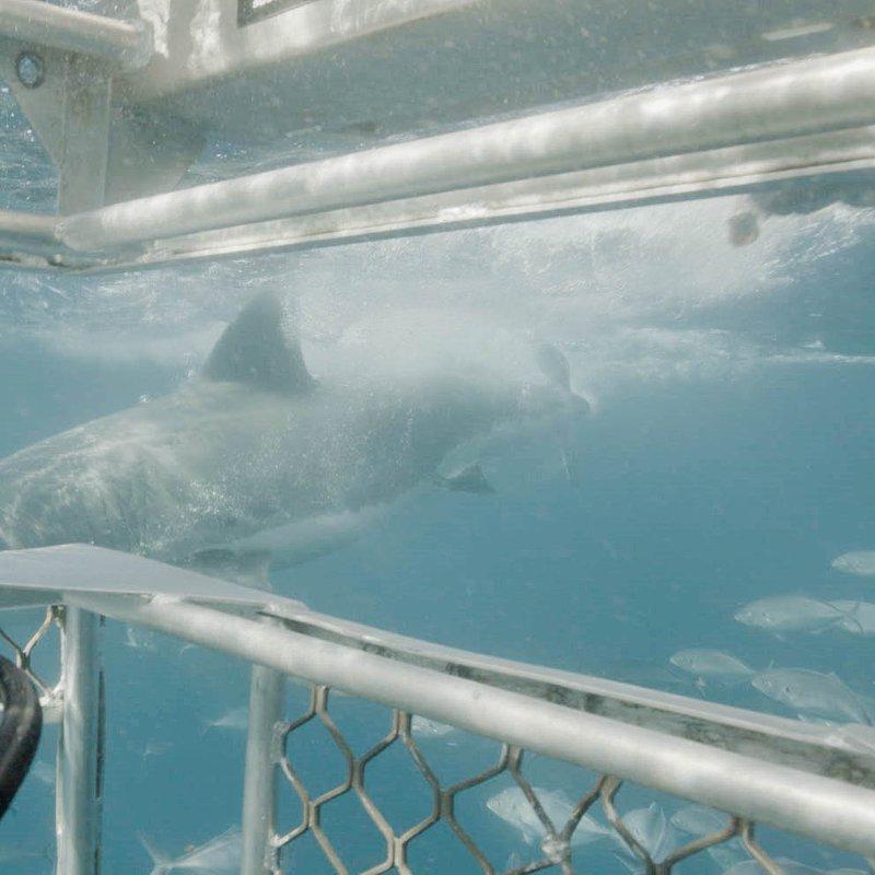 Ep105_DeadlyDuo_SharkAttackFiles_LR_19.JPG