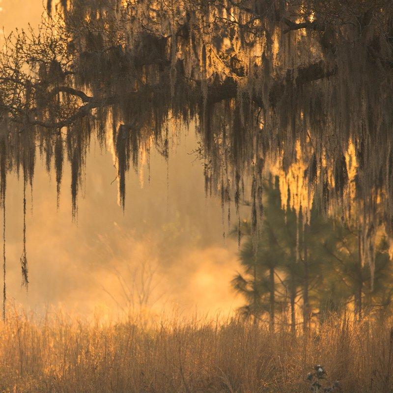 Swamp_15_FloridaUntamed.jpg