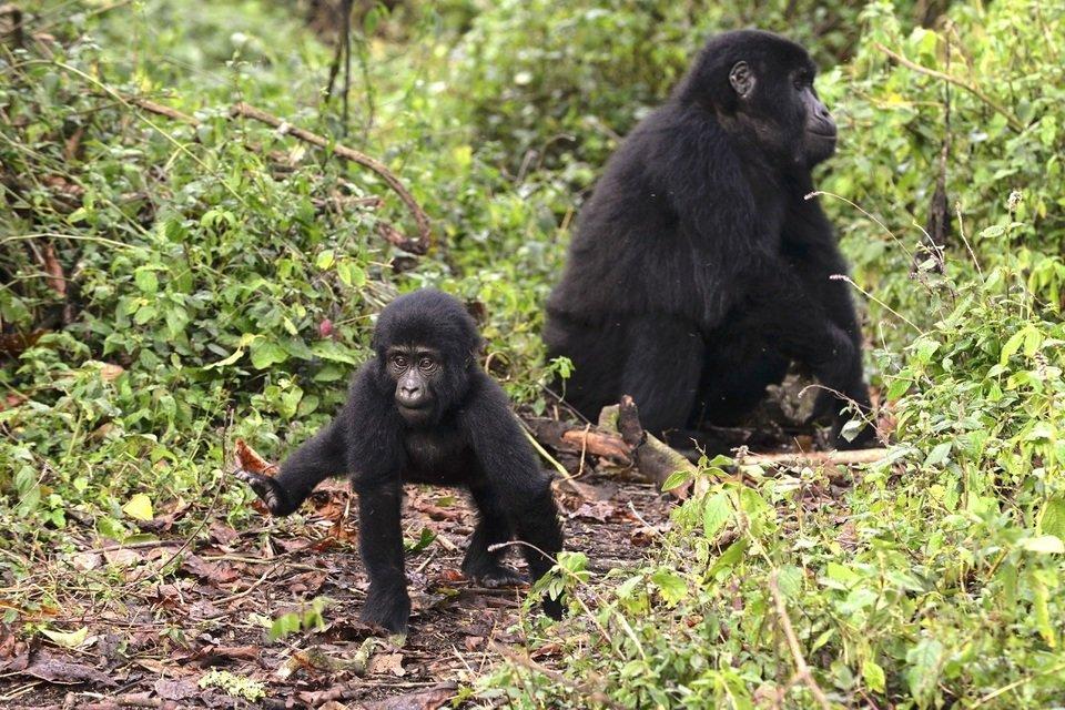 wild_uganda_male.jpg