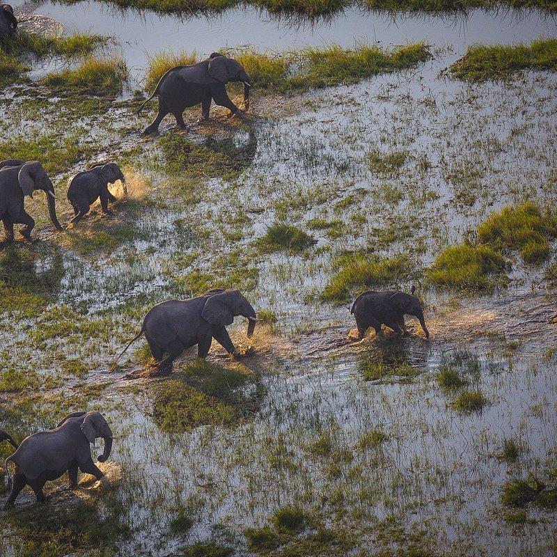 Delta rzeki Okavango 10.jpg