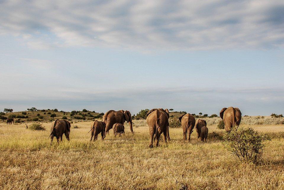 Bushveld_UntamedAfrica_Ep106_01.jpg