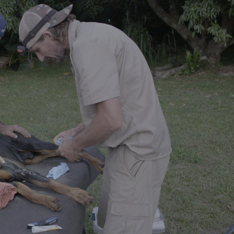 Weterynarz z Hawajów.jpg
