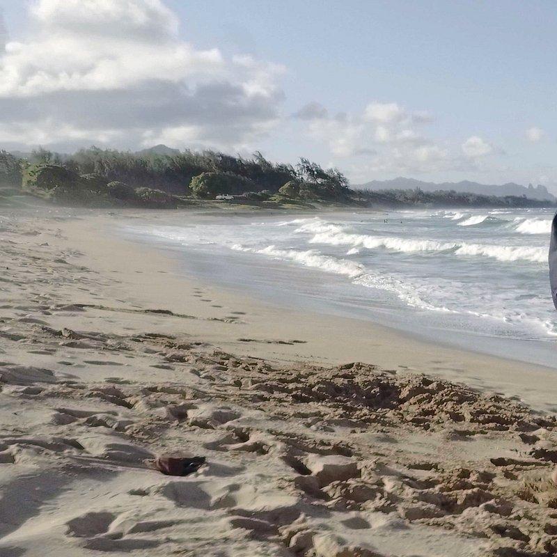 Weterynarz z Hawajów 4.jpg