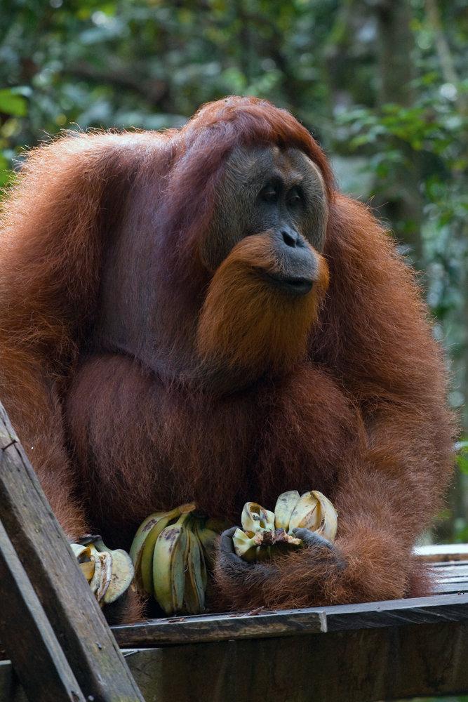 Bukit_Lawang_Sumatra_2009_Joanna_Stoga (06).jpg