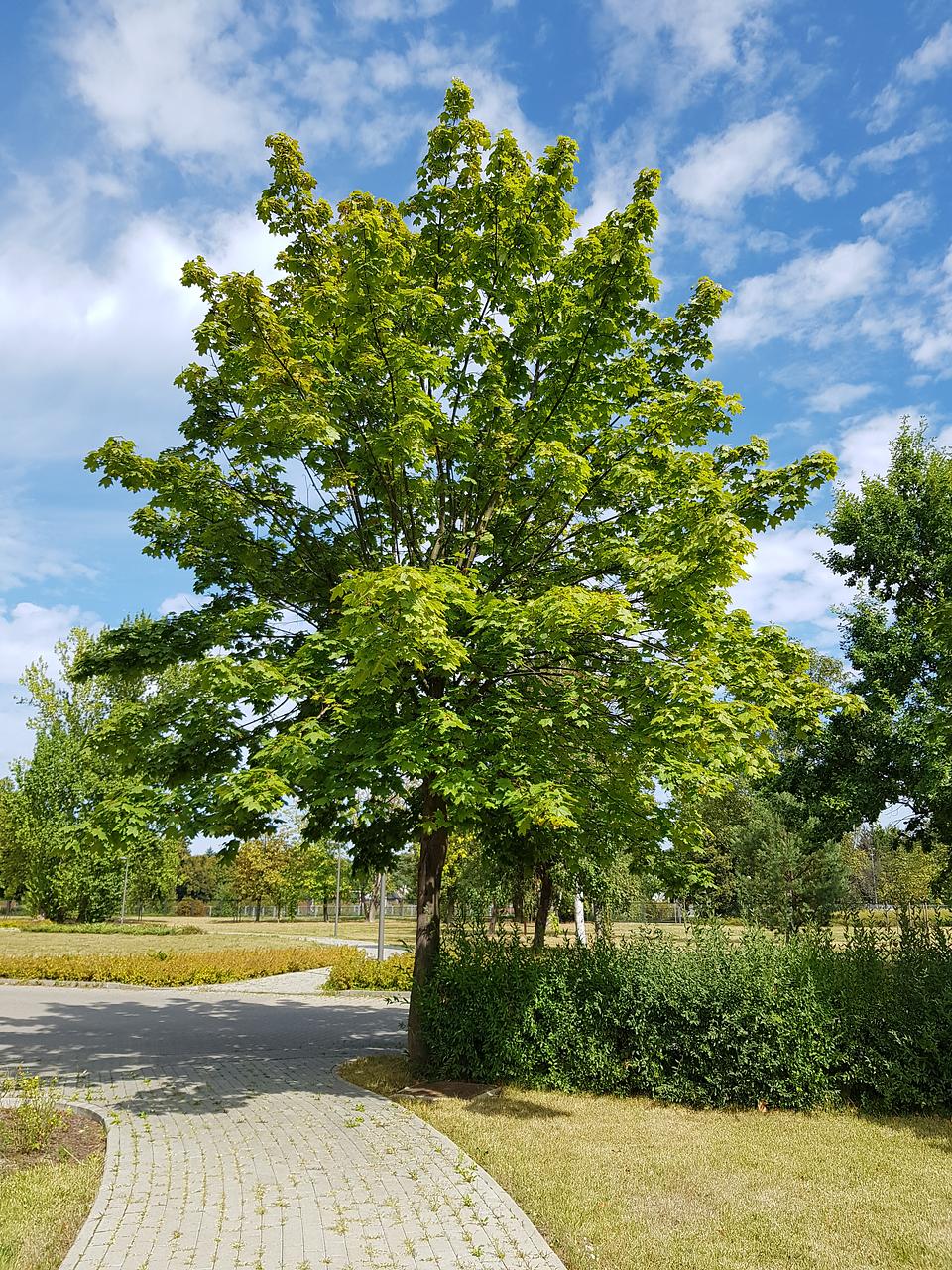 drzewo2.png