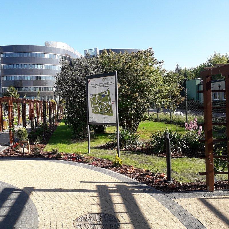 Ogród 6.jpg