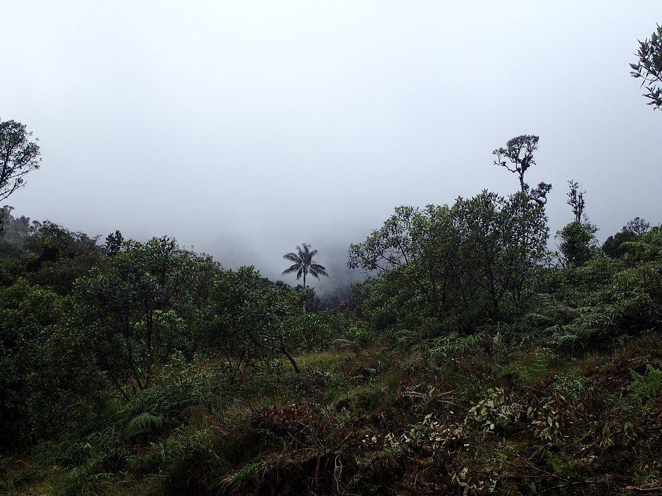 Foto 27. La Palma.JPG