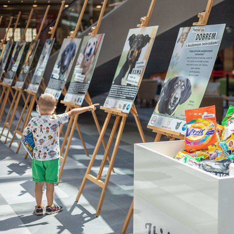 Wystawa i zbiórka dla Schroniska w Focus Mall  (3).jpg