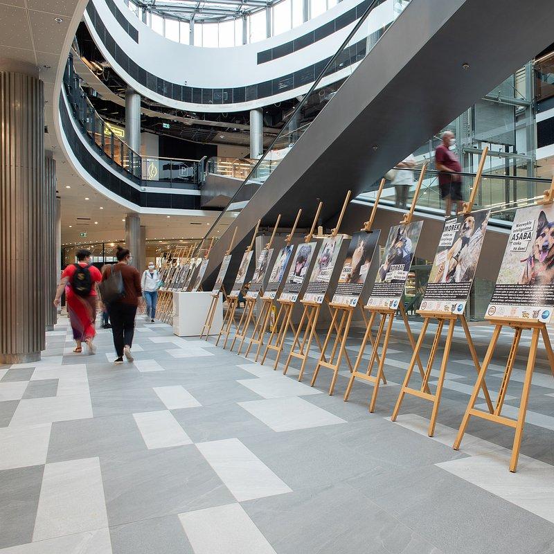 Wystawa i zbiórka dla Schroniska w Focus Mall  (1).jpg