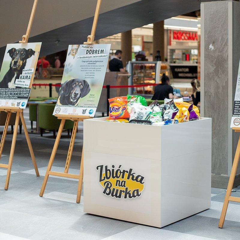 Wystawa i zbiórka dla Schroniska w Focus Mall  (2).jpg