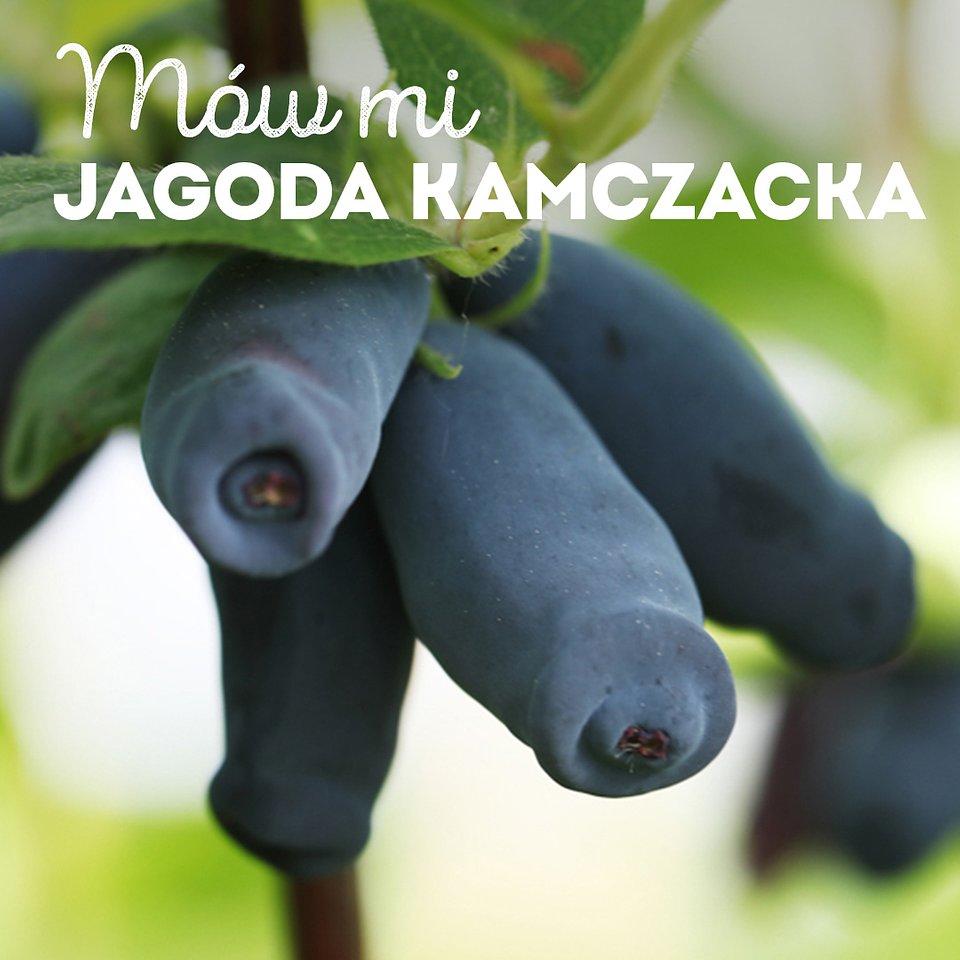 jagoda-kamczacka_1080x1080_01.jpg