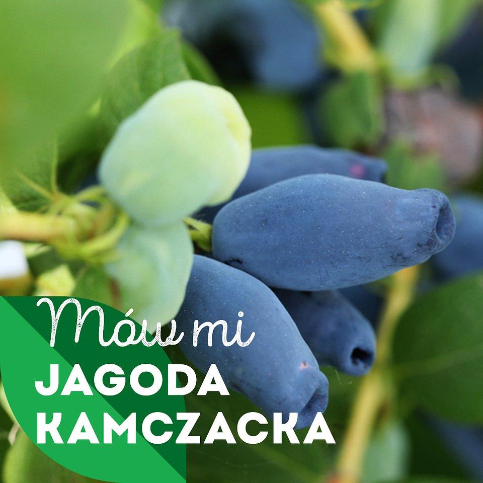 jagoda-kamczacka_1080x1080_02.jpg