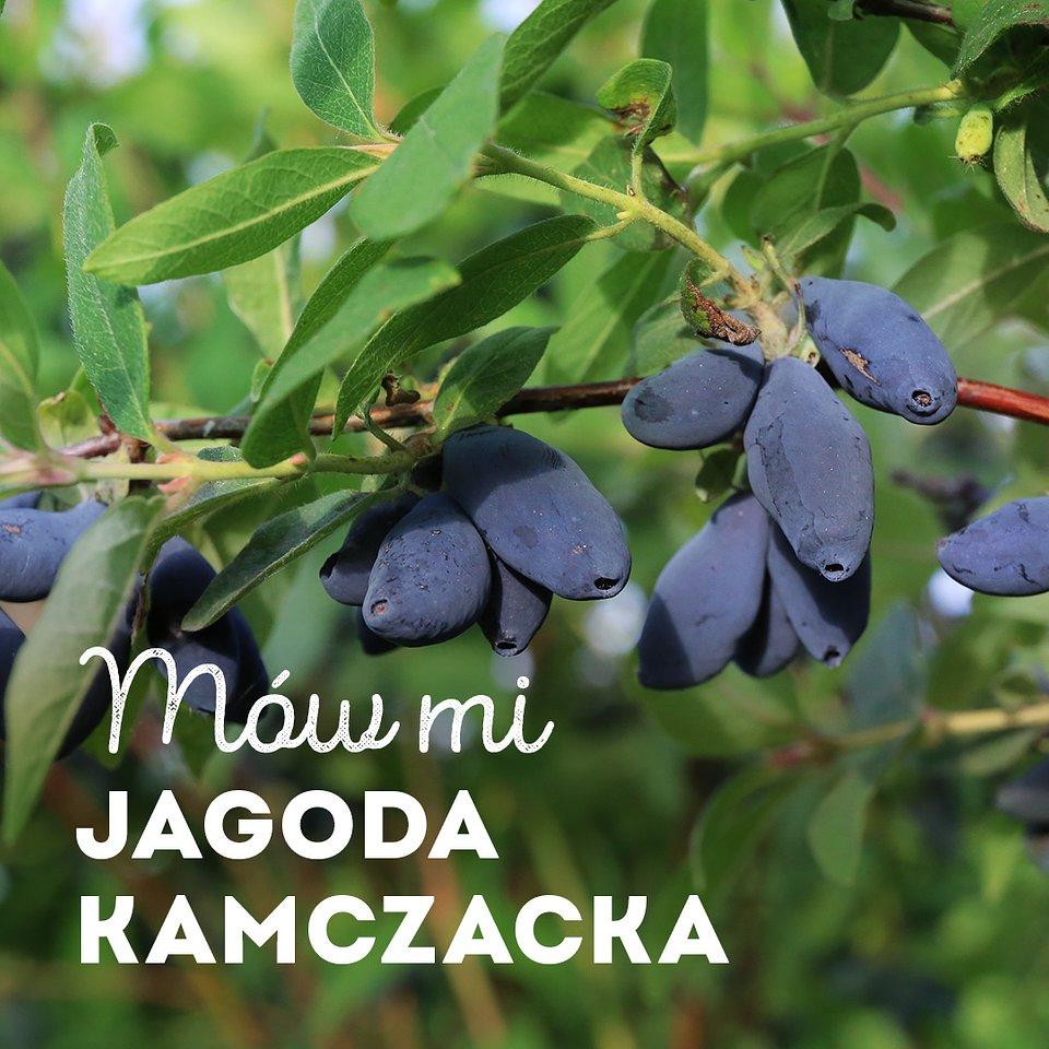 jagoda-kamczacka_1080x1080_03.jpg