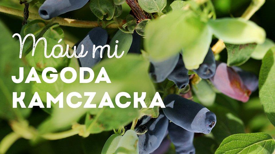 jagoda-kamczacka_1200x675_01.jpg