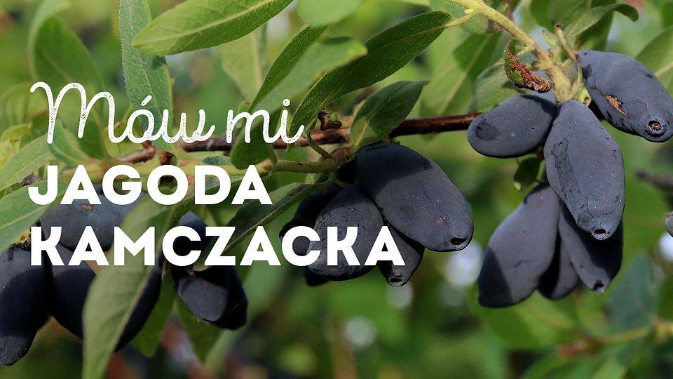 jagoda-kamczacka_1200x675_02.jpg
