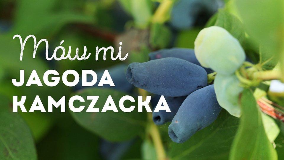 jagoda-kamczacka_1200x675_03.jpg