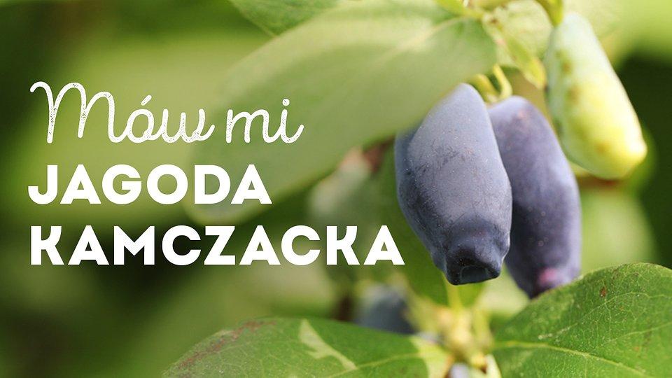 jagoda-kamczacka_1200x675_04.jpg