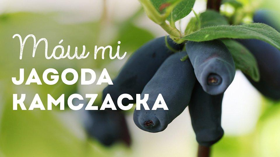 jagoda-kamczacka_1200x675_08.jpg