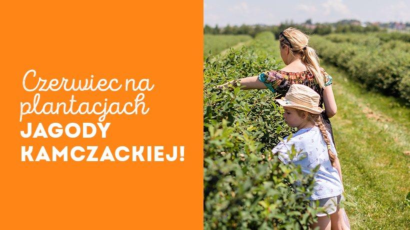 czerwiec-na-plantacjach-jagody-kamczackiej_820x461_06.jpg