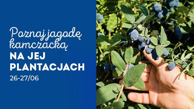 czerwiec-na-plantacjach-jagody-kamczackiej_820x461_11.jpg