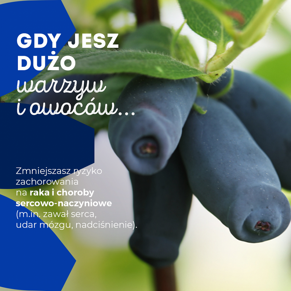 PAP Zdrowie_jagoda kamczacka (3).png