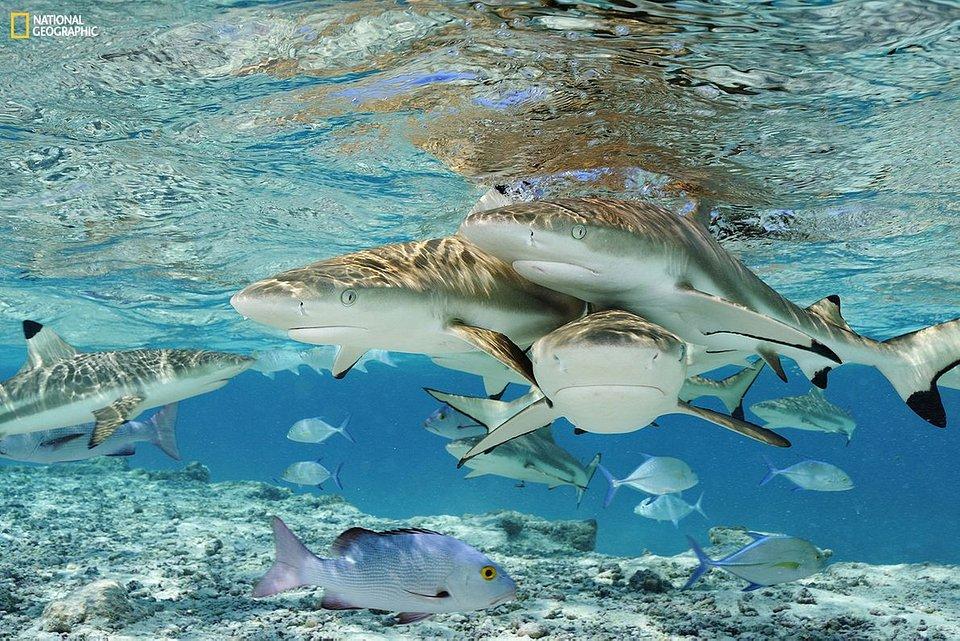 Sharks NG.jpg
