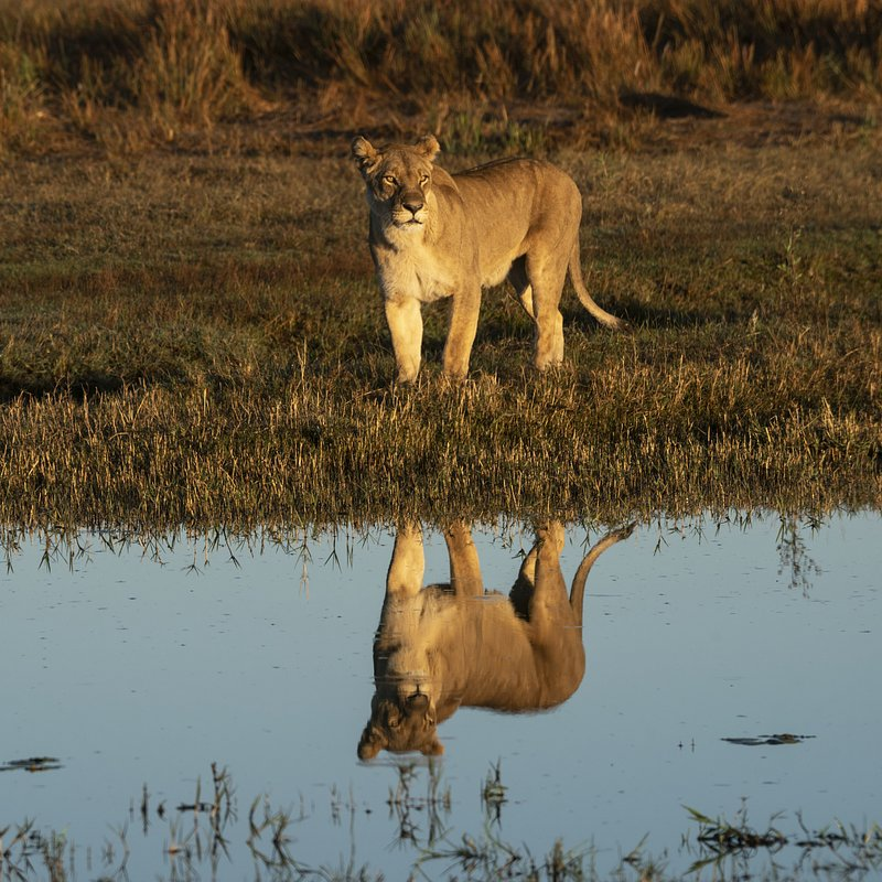 DivineJourney_104_OkavangoRiverOfDreams_27.JPG