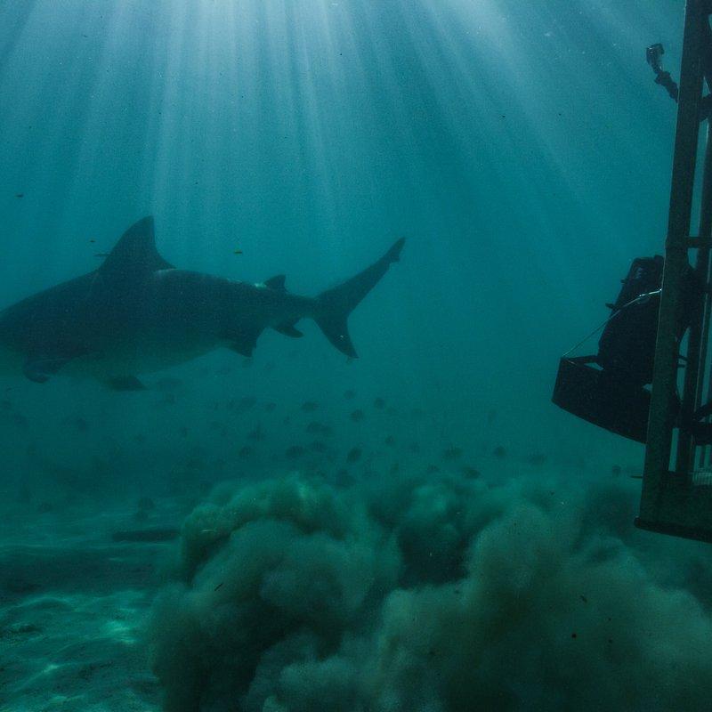 Shark-cano_01.jpg