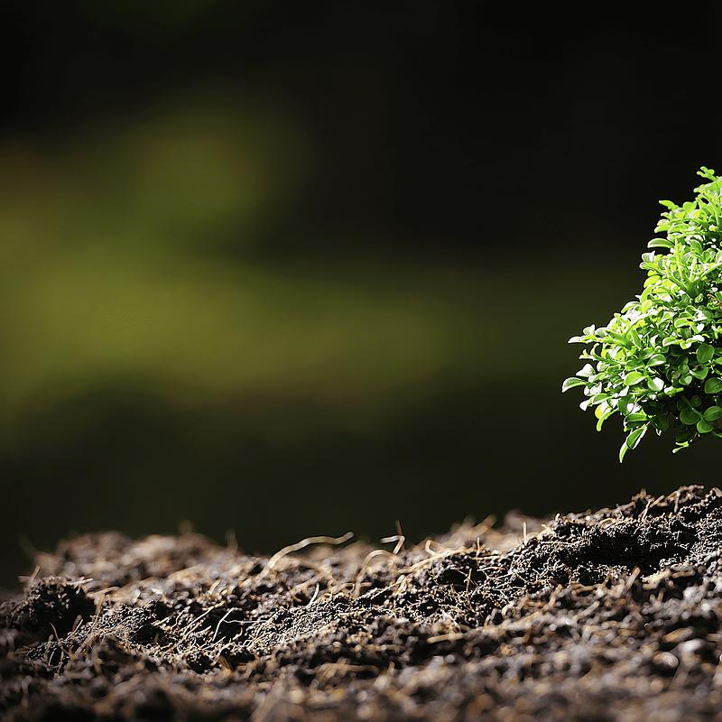 Header-Quanto-mais-carbono-podem-as-plantas-absolver-–-Estudo-Stanford.png