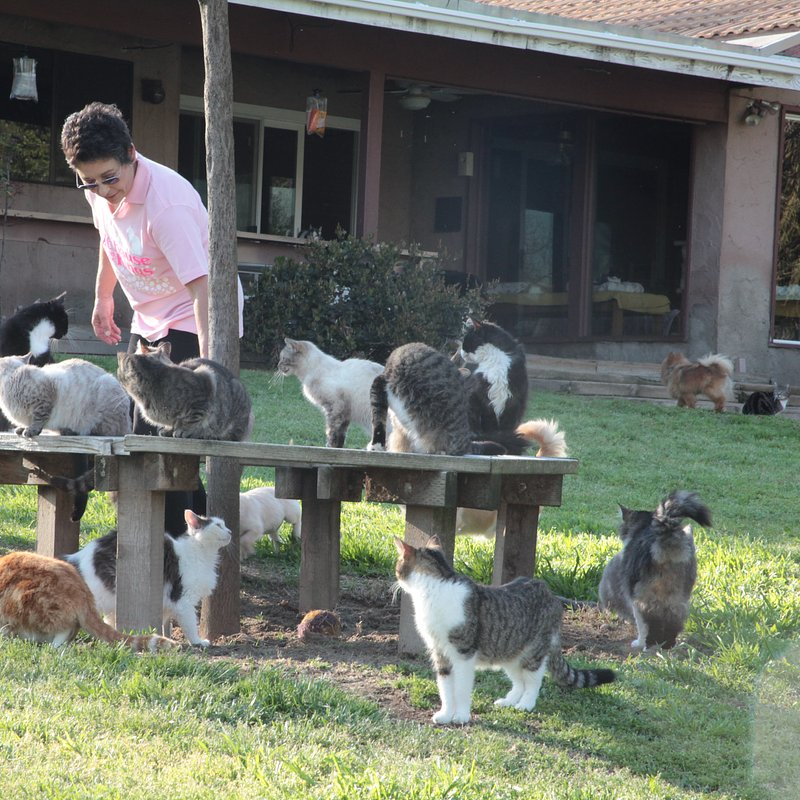 TheLadyWith700Cats_22.JPG