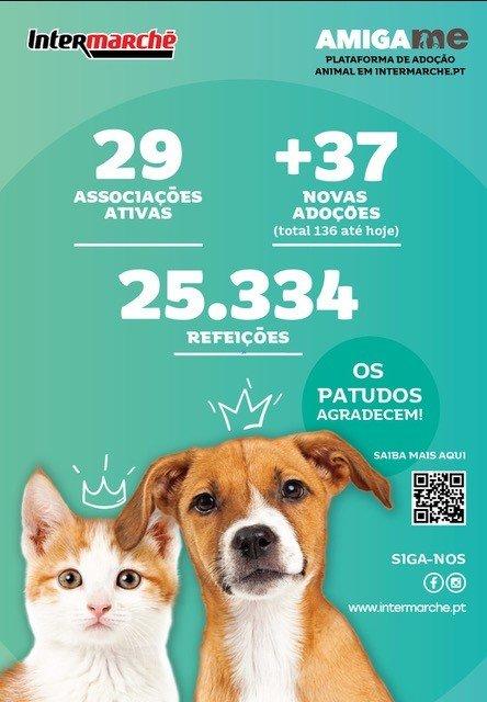 Durante a campanha Amiga-me foram adotados 37 animais, que ganharam uma família e uma nova casa