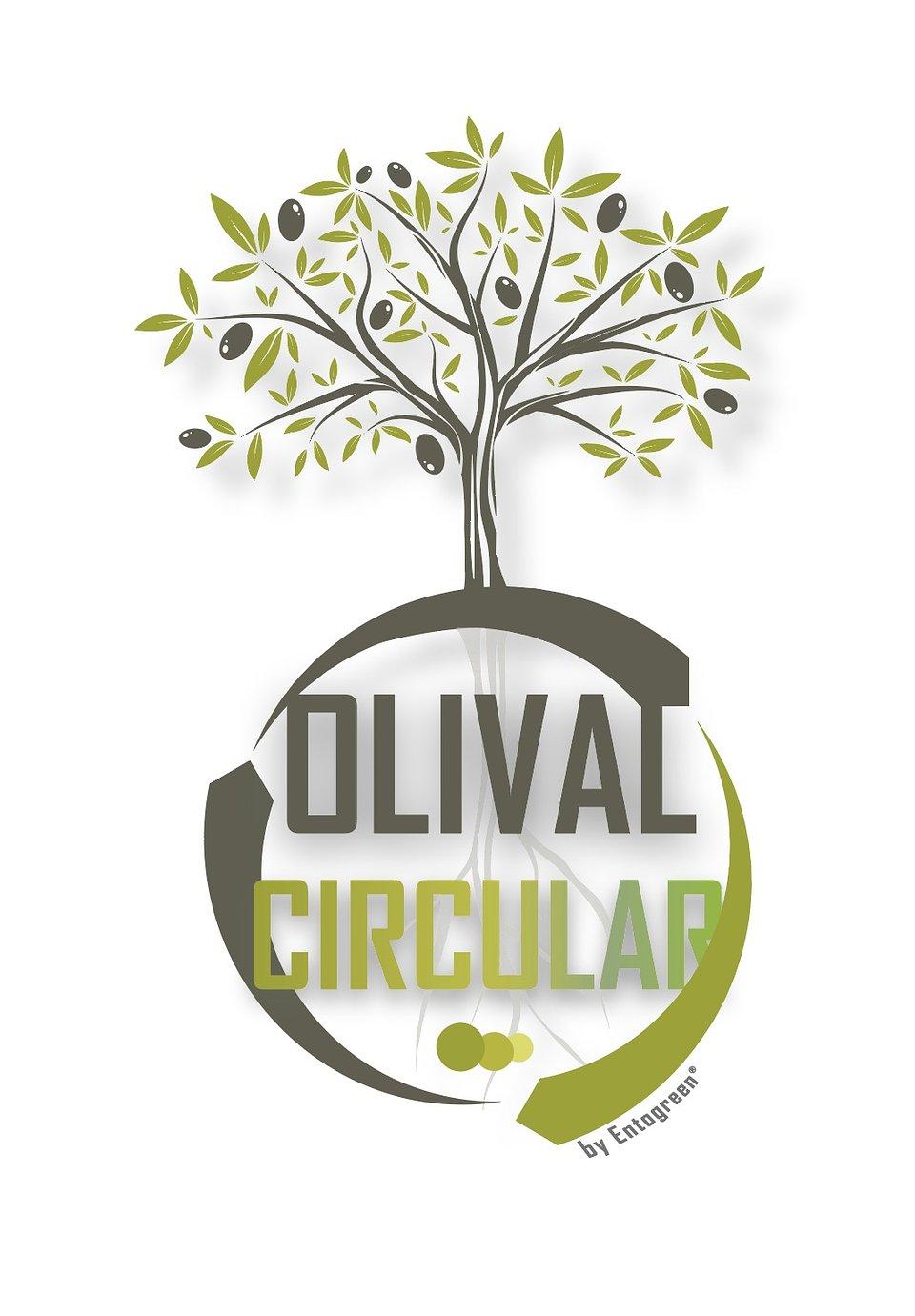 Olival circular.jpeg