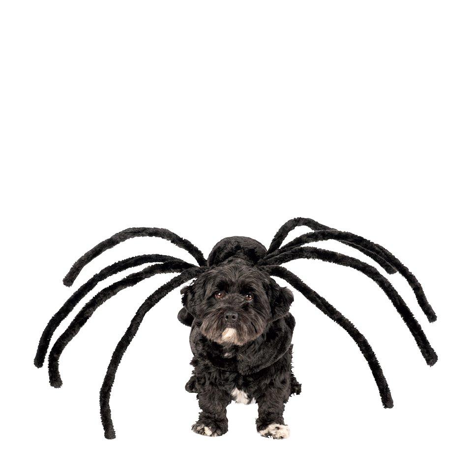 Gadżet Dla Zwierzaka Spiderdog - home&you; 45,00 zł