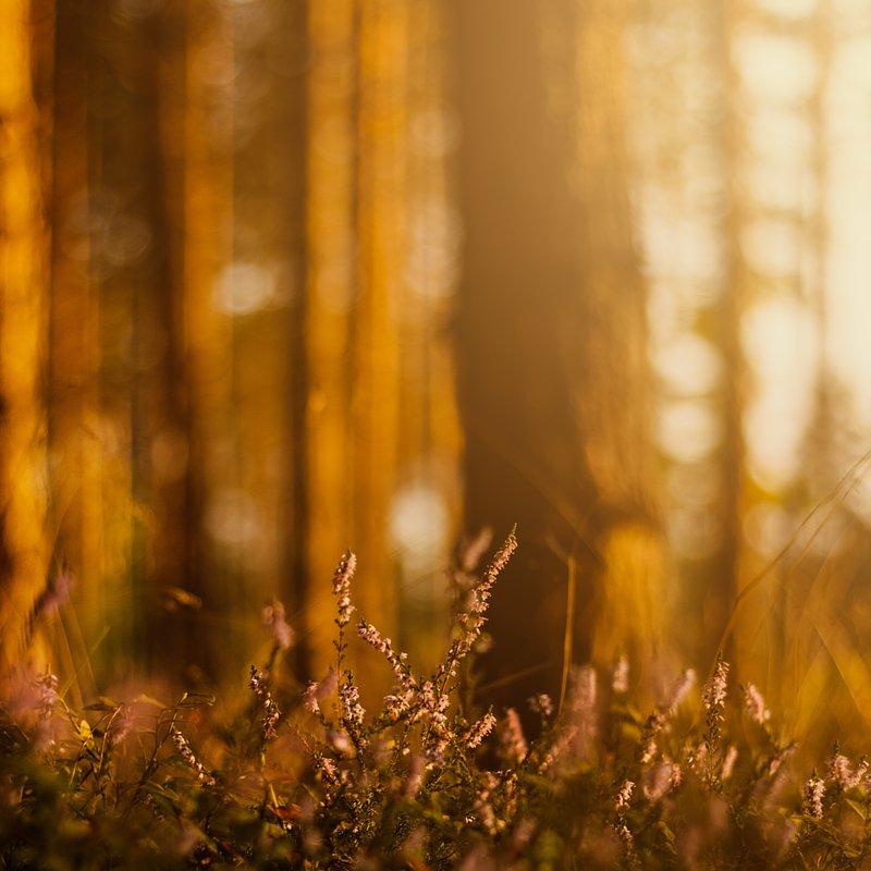 BT_Z_9_Janus Tobiasz - Magia w lesie.jpg