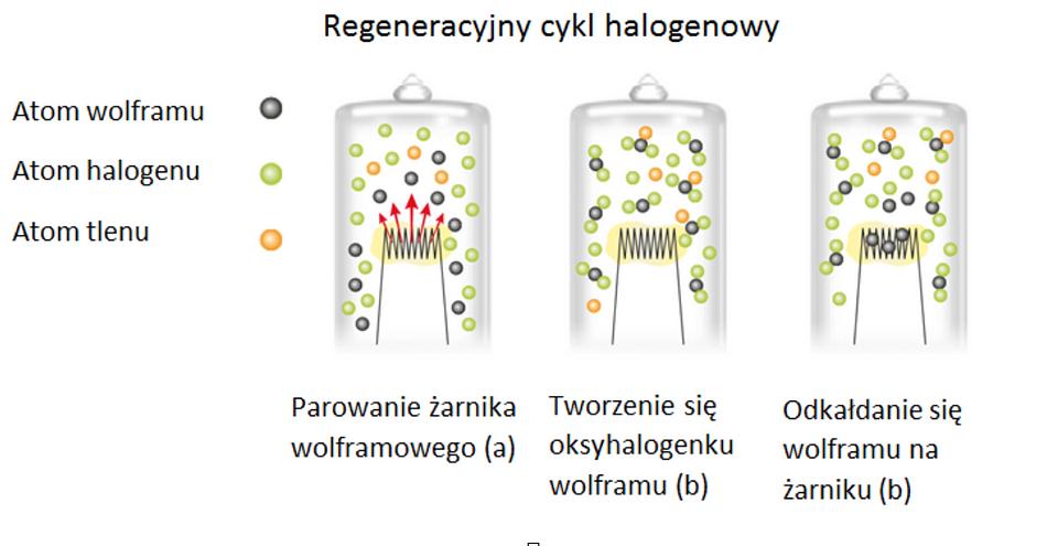 Dzięki przedstawionej reakcji, lampy halogenowe zachowują swoje początkowe właściwości przez cały okres użytkowania.