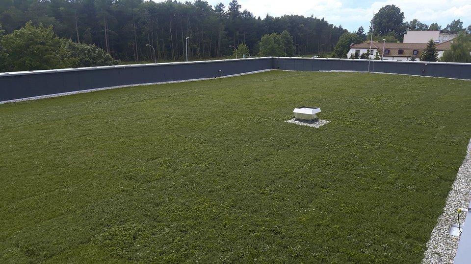 Biedronka_zielony dach_2.jpg