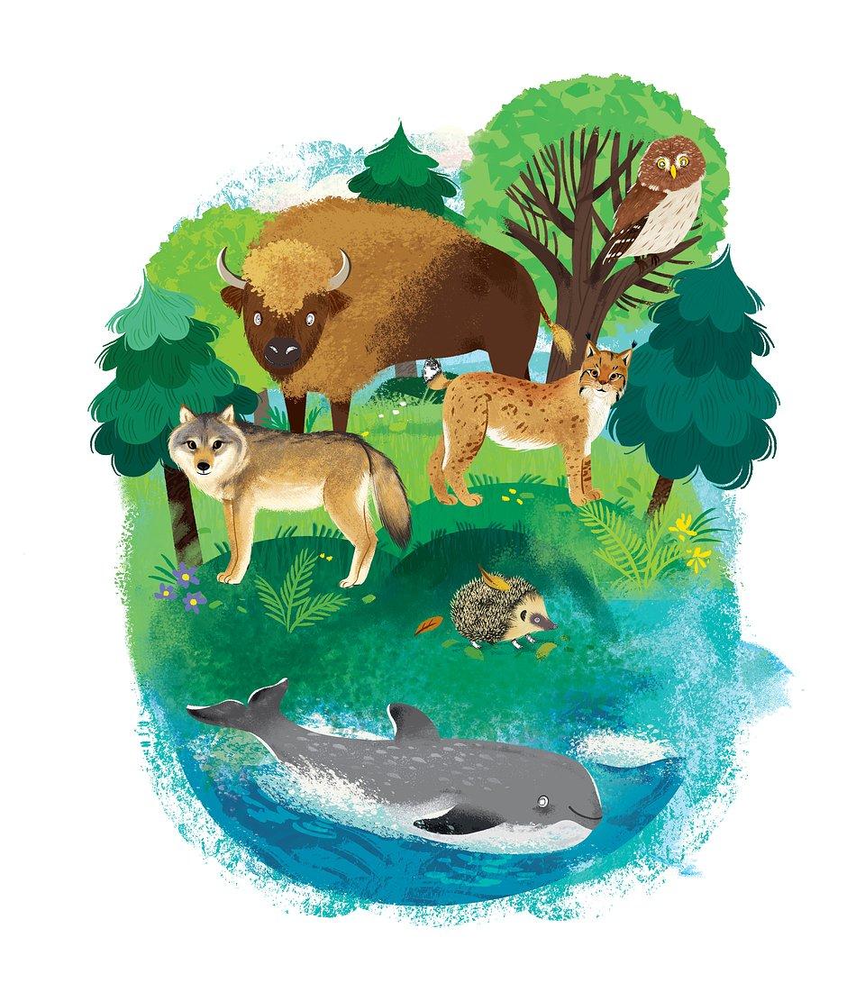 Biedronka ksiażka zwierzęta.jpg
