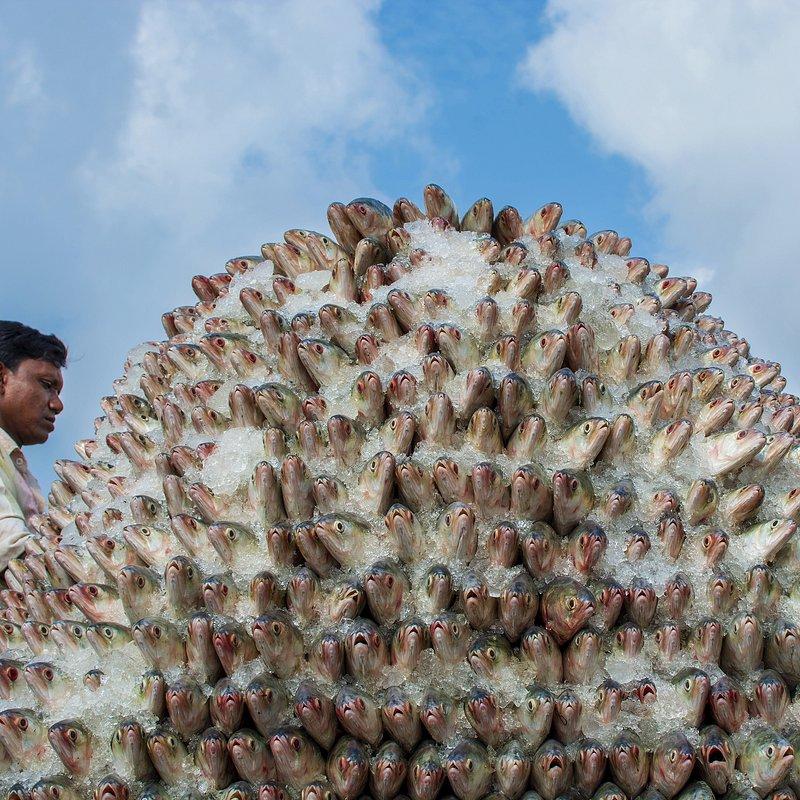Hilsha Hill by @sohelchy07, Bangladesh.jpg
