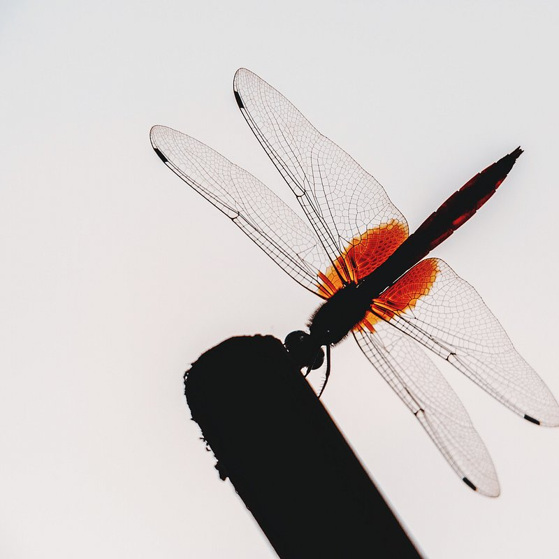 Dragonfly by @zaksyun, China.jpg