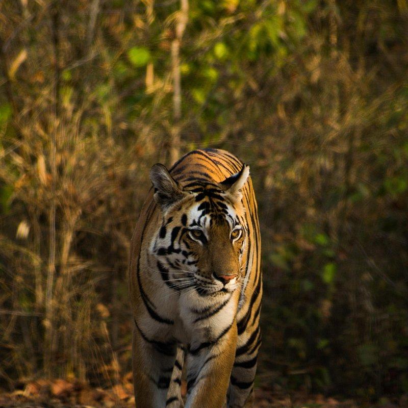 Early morning light makes the beast shine by Manan Mukherjee (India).jpg