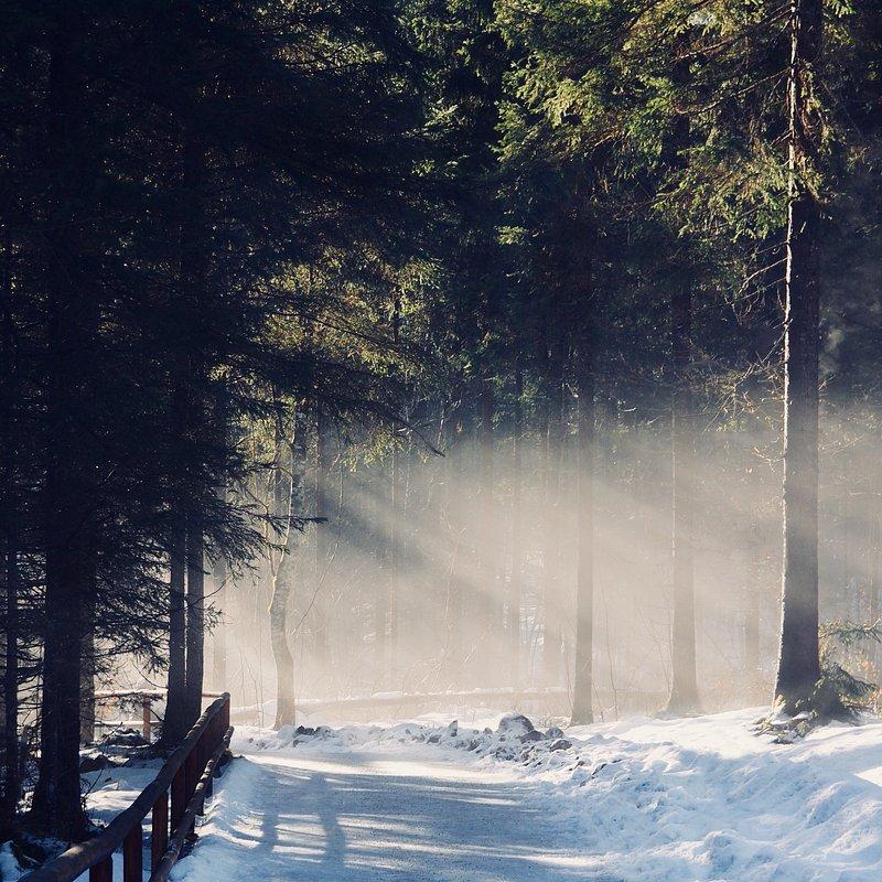 Shining by Christoph Seabeacher (Austria).jpg
