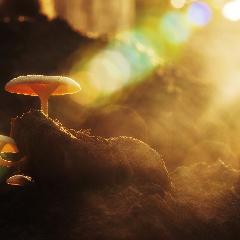 Mushroom by Theo Widharto (Indonesia).jpg