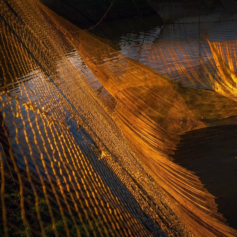 Golden Hour by Md Rafayat Haque Khan (Bangladesh).jpg