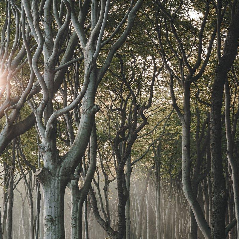First light by Anskar Lenzen (Ghost forest, Germany).jpg