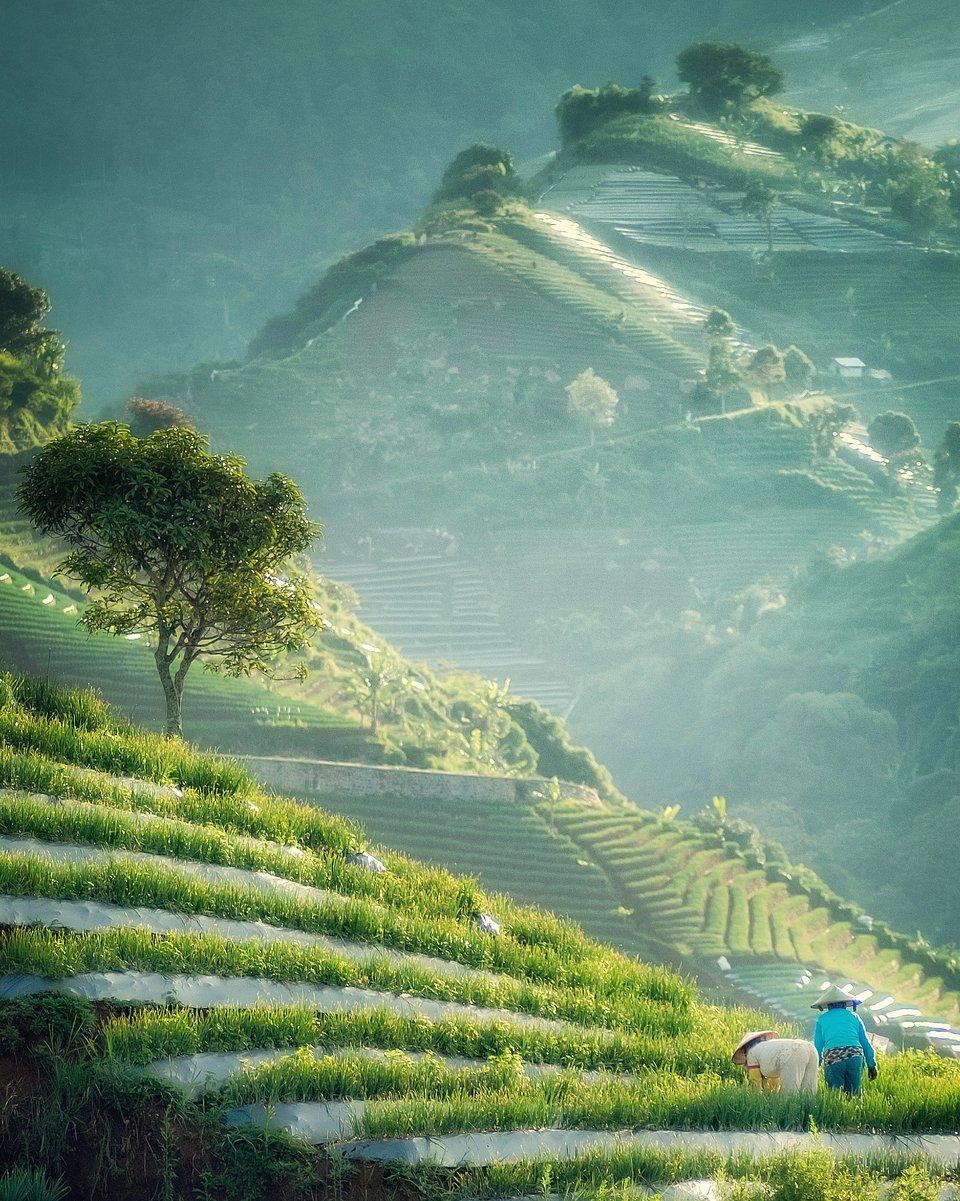 Farm lands in Argapura Majalengka, Indonesia (Abu Rizchi / AGORA images)