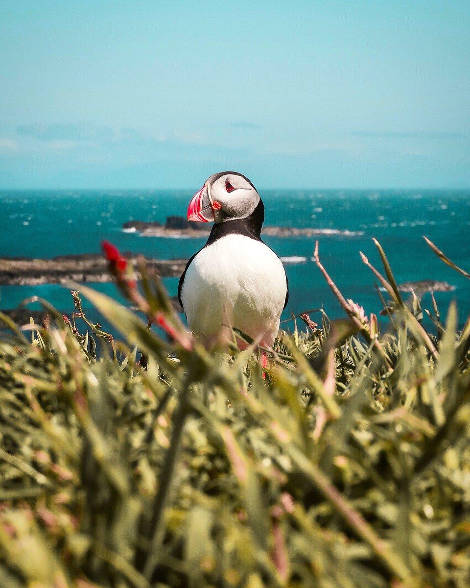 Puffin's brightly coloured beak during the breeding season, Palma de Mallorca (Daniel Sampedro/AGORA images)