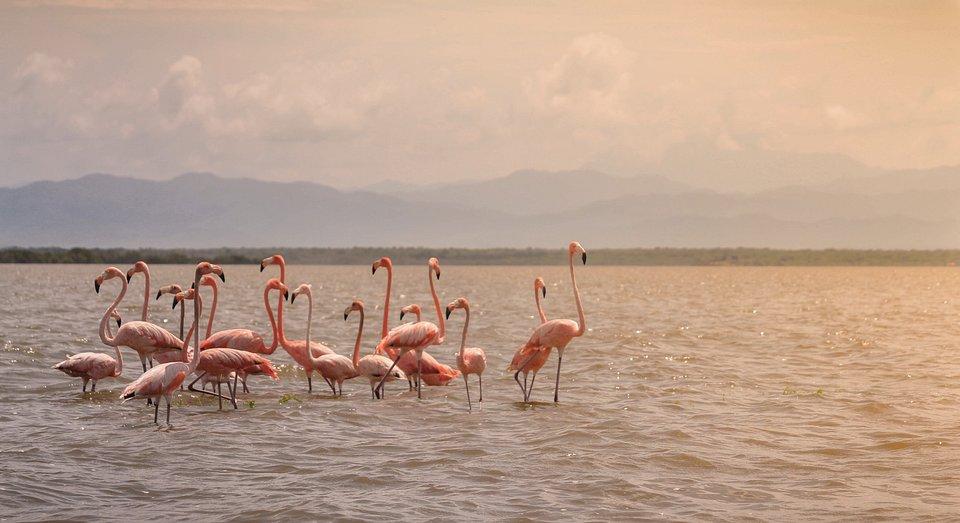 Flamingo sanctuary in La Guajira, Colombia (Danny Ospina/AGORA images)