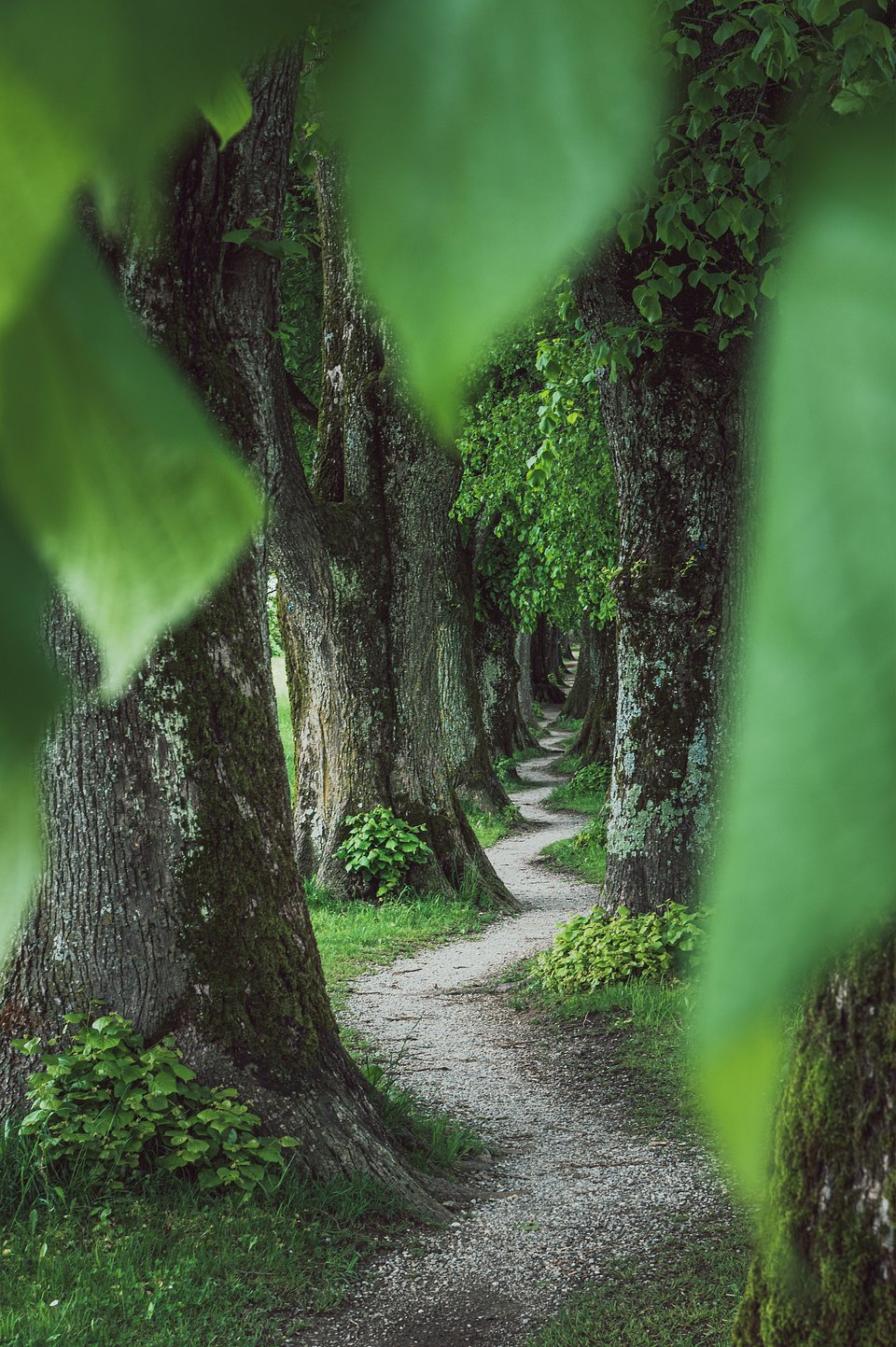 Magical path in the Bavarian countryside, Germany (Maximilian Dreher/AGORA images)