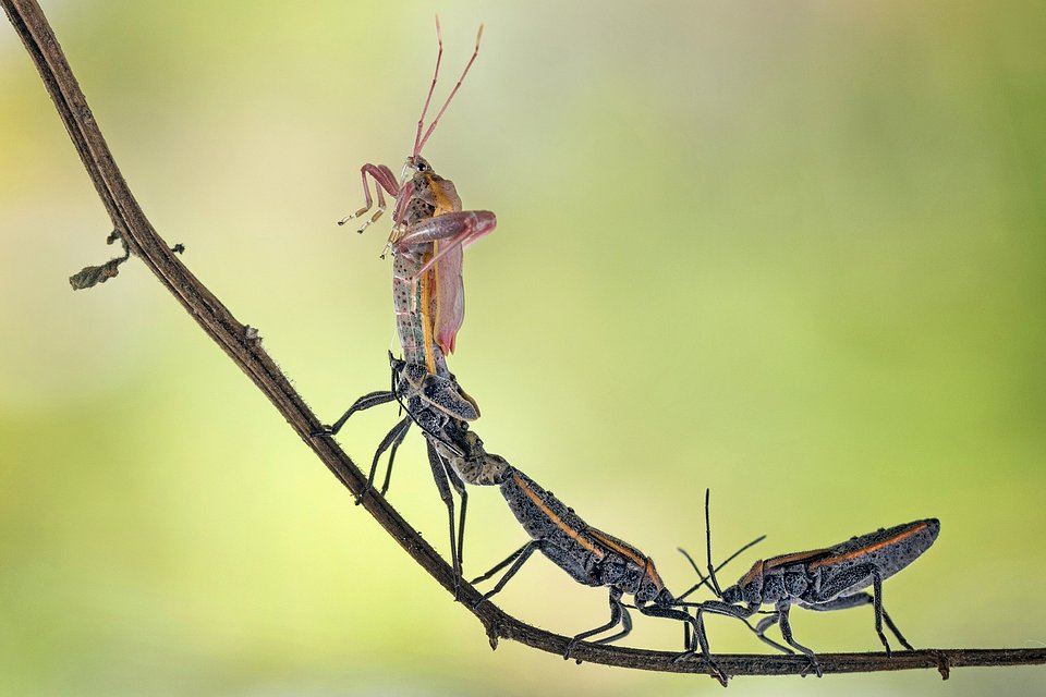 A new life starting for this insect in Indonesia (Hendy Mp/AGORA images)